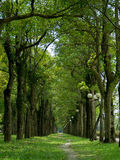 Path. A sports park. There are lots of neat and tidy trees Royalty Free Stock Photo
