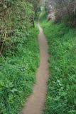 Path at spring Stock Photos