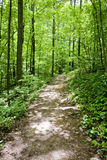 Path Through Spring Forest Royalty Free Stock Image