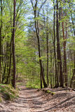 Path through the spring forest Royalty Free Stock Photo