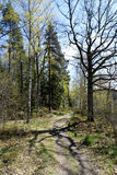 Path in the spring forest and beautiful tree shadow Stock Images
