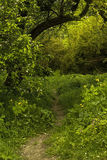 Path in a spring forest in a daylight Royalty Free Stock Images