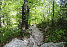 Path in spring forest Royalty Free Stock Images