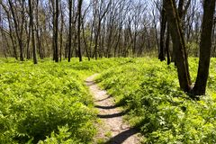 Path in spring forest Stock Photos