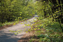 Path in the spring garden Stock Photography