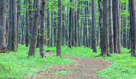 Path through spring green forest Stock Photos