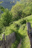 Path in the spring in the mountains of Romania. Path in the spring mountains of Romania Royalty Free Stock Photo