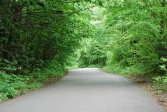 Path in spring park. Asphalt path in spring Kyiv park Royalty Free Stock Photos