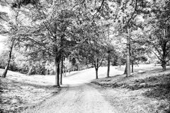 Path in spring or summer forest, nature. Road in wood landscape, environment. Footpath among green trees, ecology. Nature, environment and ecology concept Stock Images