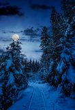Path through spruce forest in winter at night. Path through spruce forest in winter. beautiful nature scenery with snowy trees at night in full moon light Stock Photo