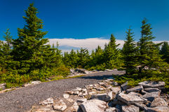 Path through spruce trees on the summit of Spruce Knob, West Virginia Royalty Free Stock Images