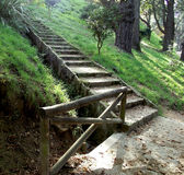 Path of stairs in pine forest Stock Photography