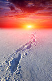 Path in steppe on sunset background Stock Images
