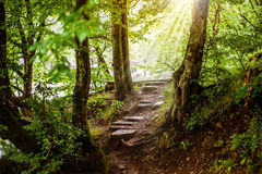 Path and steps in the beautiful magic forest Stock Image