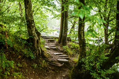 Path and steps in the beautiful magic forest Stock Photos