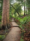 Path and steps through a garden with a tall tree trunk. Path and steps winding through a garden with bushes and a tall ancient tree trunk with interesting bark stock images