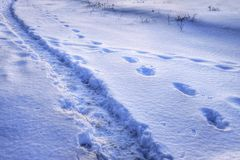 Path and steps on the snow. HDRI image. Somebody have his own way. Path and steps on the snow. HDRI image Royalty Free Stock Photography