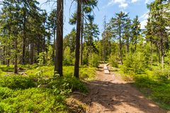 Path in The Stolowe Mountains. Path in The Stolowe Mountains, Sudetes, Poland Royalty Free Stock Photos