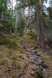 A path of stones among the wild forest. A path of stones among the wild dense forest Stock Image