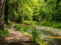 Path and stream in the forest. Photo of a footpath and stream running through a forest Stock Photos