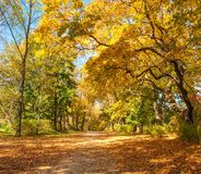The path strewn with fallen leaves. Path strewn with fallen leaves in a sunny autumn forest stock photography