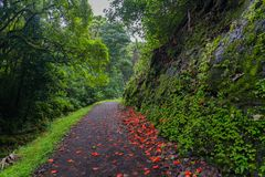 Flower-Strewn Path Through Lush Forest Royalty Free Stock Photo
