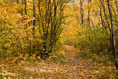 The path strewn with yellow leaves Stock Photo
