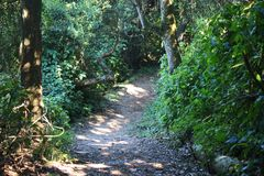 PATH IN SUBTROPICAL FOREST. Shaded path in subtropical vegetation with green leaves and plants Royalty Free Stock Photos