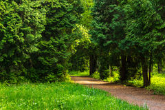 Path in summer city park. Path near old trees stand in city park Royalty Free Stock Images