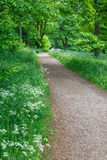 Footpath in summer meadow Stock Photo