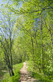 Path in summer forest Stock Photo