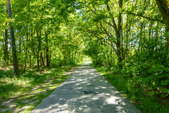 Path Through Summer Forest Royalty Free Stock Photography