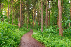 Path in summer forest stock photos
