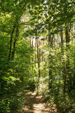 Path in a summer forest Royalty Free Stock Images