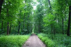 Path in green deciduous forest. Path in the summer green deciduous forest Stock Images