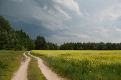 Path in summer green forest. Beautiful wood in ukraine. green and yellow trees in summer royalty free stock image