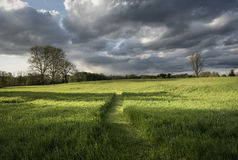 Path Through A Summer Hayfield. A path cuts through a shimmering hayfield near sunset with dramatic stormy sky above Stock Photo