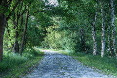 Path in a summer landscape. Summer, overgrown road with birch and oak Stock Images