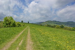 Path in the summer meadow Royalty Free Stock Photos