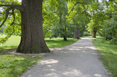 Path in the summer park alley Royalty Free Stock Images
