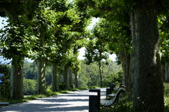 Path in the summer Royalty Free Stock Photo