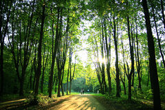 Path in summer sunny forest Stock Photography