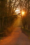 Path at sunrise A. Photograph of a woodland path at sunrise Royalty Free Stock Photo