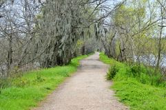 Path surrounded by tree near a lake Royalty Free Stock Photography