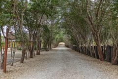 Path surrounded by trees, Angola. Royalty Free Stock Image