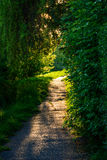 A path surrounded by vegetation in the park at sunset. Royalty Free Stock Photo