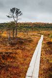 Path through a swamp. Path through swamp Kakerdaja in Estonia Stock Photo