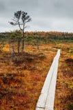 Path through a swamp Stock Photo