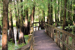 Path Through the Swamp. In Lake Martin Louisiana and the rookery Stock Photography