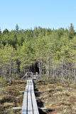 Path through swamp. Path through pine trees in a swamp - springtime Royalty Free Stock Photo